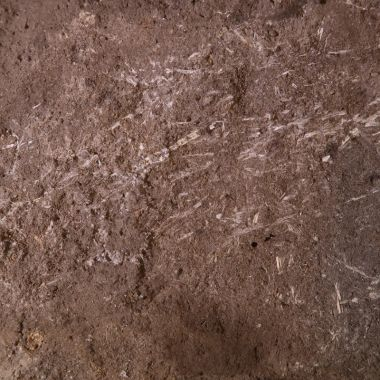 Cama más Antigua de la Historia Hierba