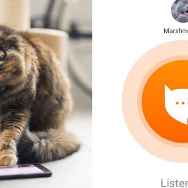 Crean una aplicación para traducir los maullidos de tu gato