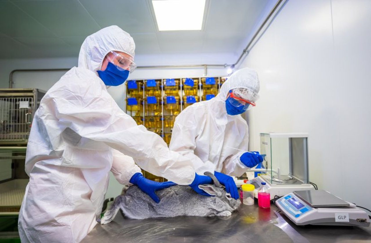 Rusia aprueba vacuna para animales Covid-19