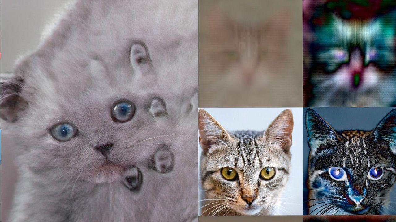 Inteligencia artificial crea gatos que nunca van a existir.