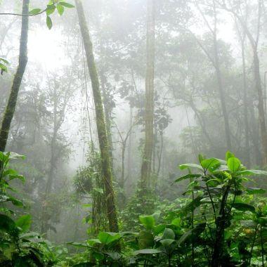 Selva Tropical Colombia Asteroide Extinción Dinosaurios