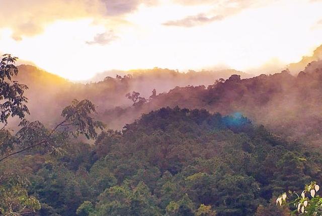 Selva Tropical Asteroide Extinción Dinosaurios