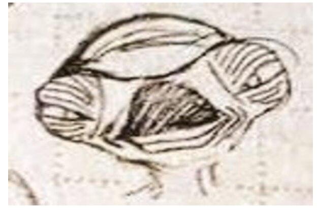 cell et extraterrestre diseño original dragon ball z