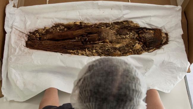 La antropóloga chilena Verónica Silva muestra una de las momias de la antigua cultura Chinchorro en el Museo Nacional de Historia Natural de Santiago.