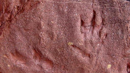 Huellas fósiles.