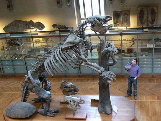 El esqueleto de un perezoso gigante en comparación con un ser humano.