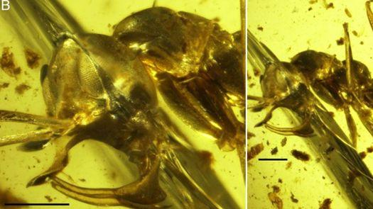 Descubren hormiga de 98 millones de años con un punto de metal en su cabeza, y fue probablemente un vampiro