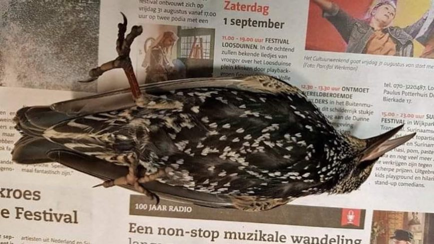 Hundreds of birds died during test of a 5G antenna in the Netherlands birds died during test of a 5G