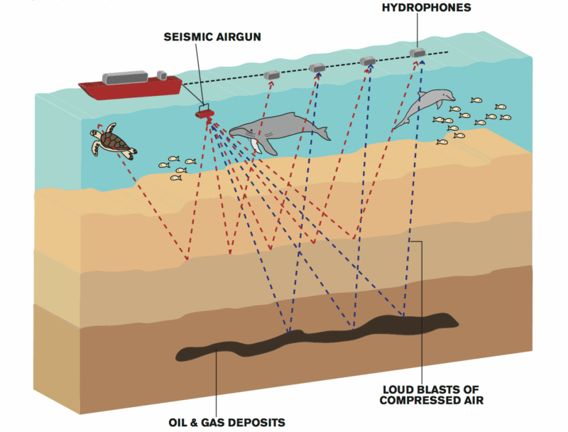 sesimic-testing-for-oil-drilling