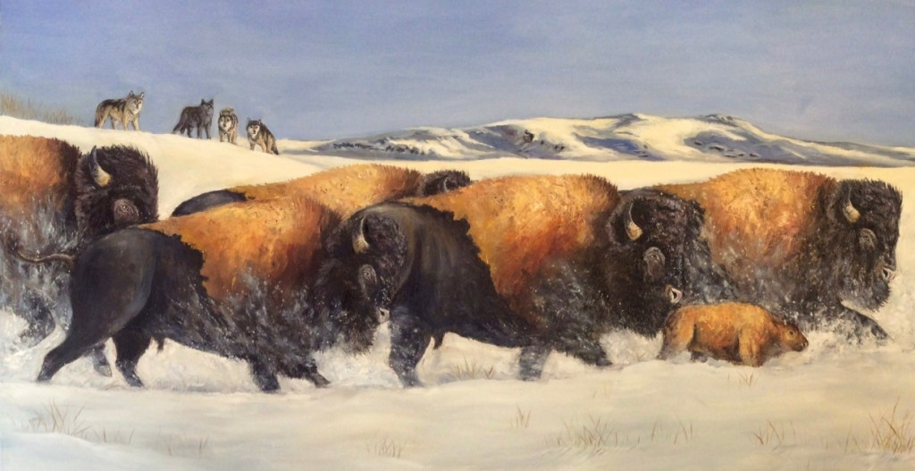 oil painting of a herd of bison on a snowy field with wolves watching in the background