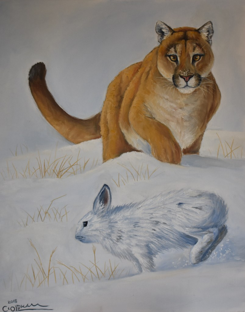 Oil painting of mountain lion or cougar chasing a snowshoe hare or rabbit in the snow by Cody Oldham