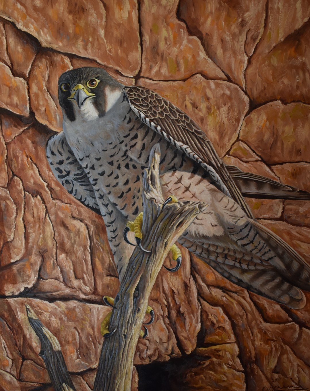 Oil painting of peregrine falcon by Cody Oldham