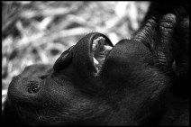 Animal-07