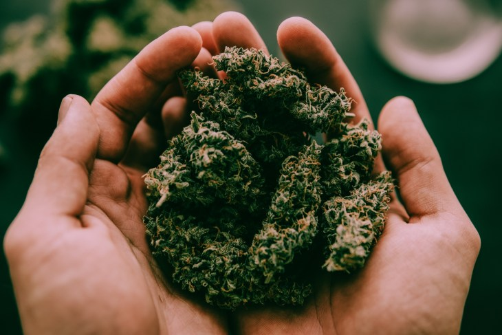 Marijuana in a person's hand