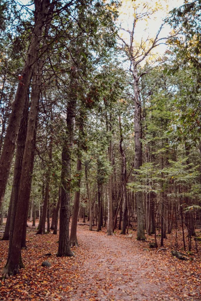 Les arbres du Parc de la Péninsule de Bruce en automne au Canada