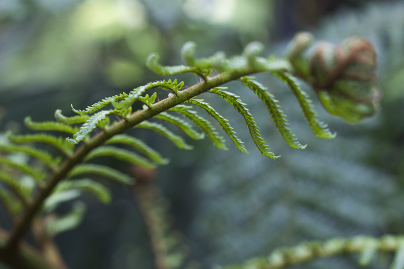 Palmengarten 2 - coeurdelisa