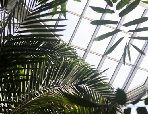 Palmengarten 1 - coeurdelisa