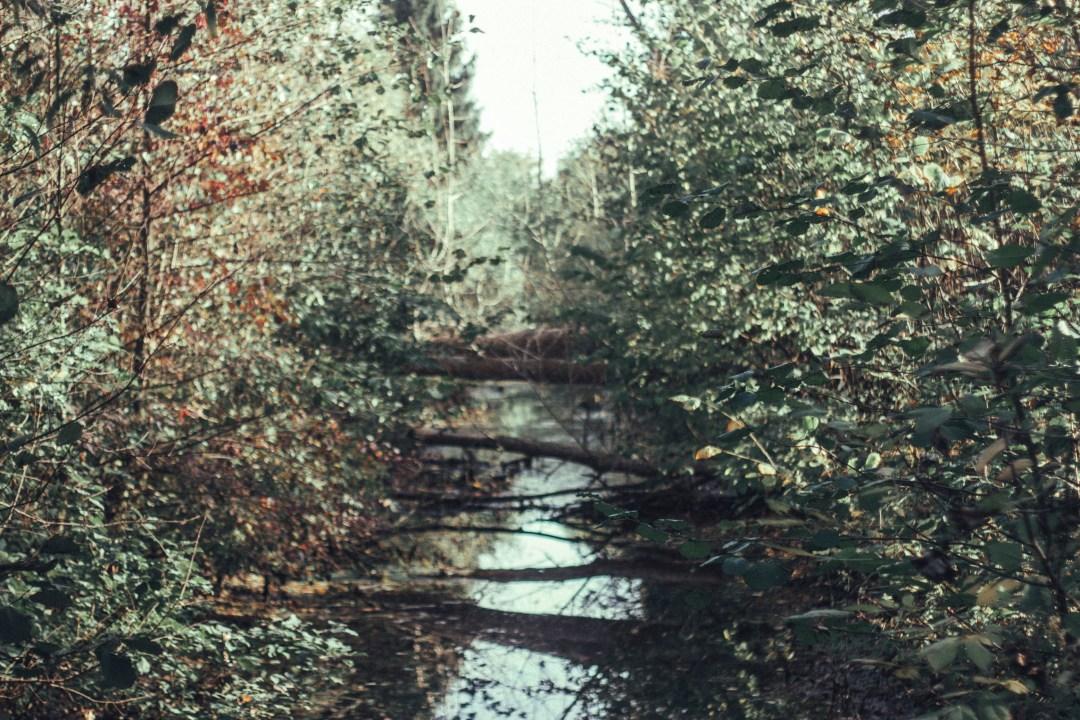 Outfit Glencheck Blazer Herbstlandschaft