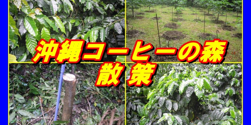 沖縄コーヒーの森