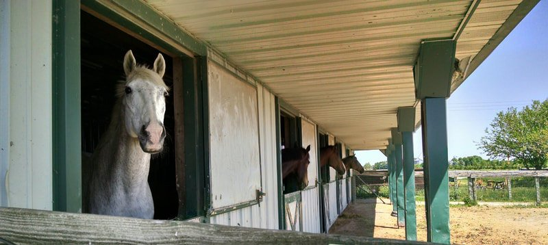 Illinois Equine