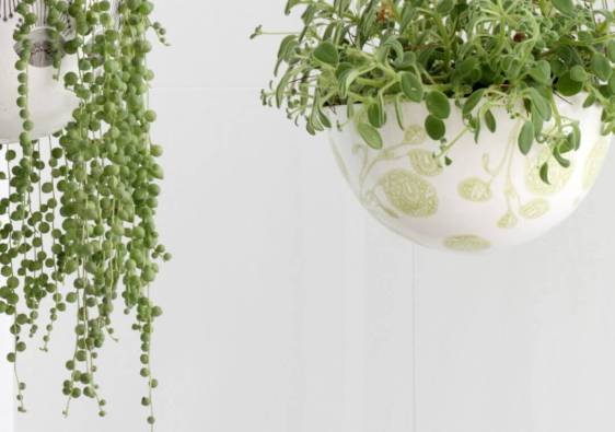 10 purifying plants