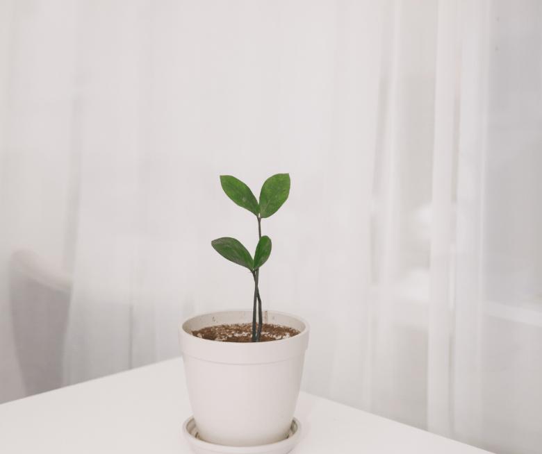 thriving plants