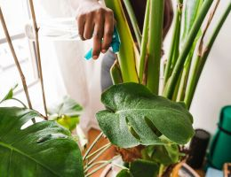 indoor plants that won't die