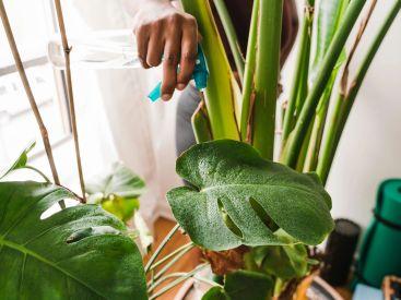 indoor plants that won't die