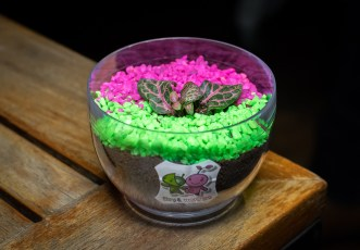 STREET 50 Egg Buffet—Easter Egg Terrarium