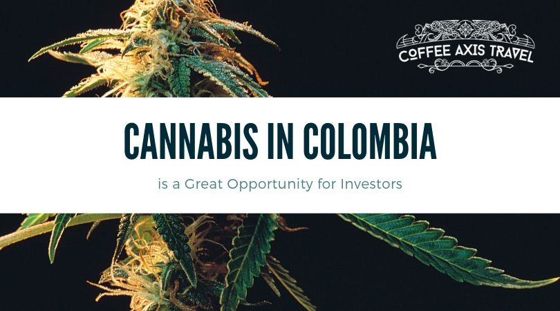 Cannabis in Colombia is a Great Opportunity