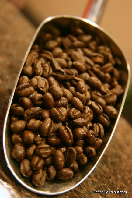 頂級藍山咖啡 TATA Cafe – 香港咖啡文化促進會