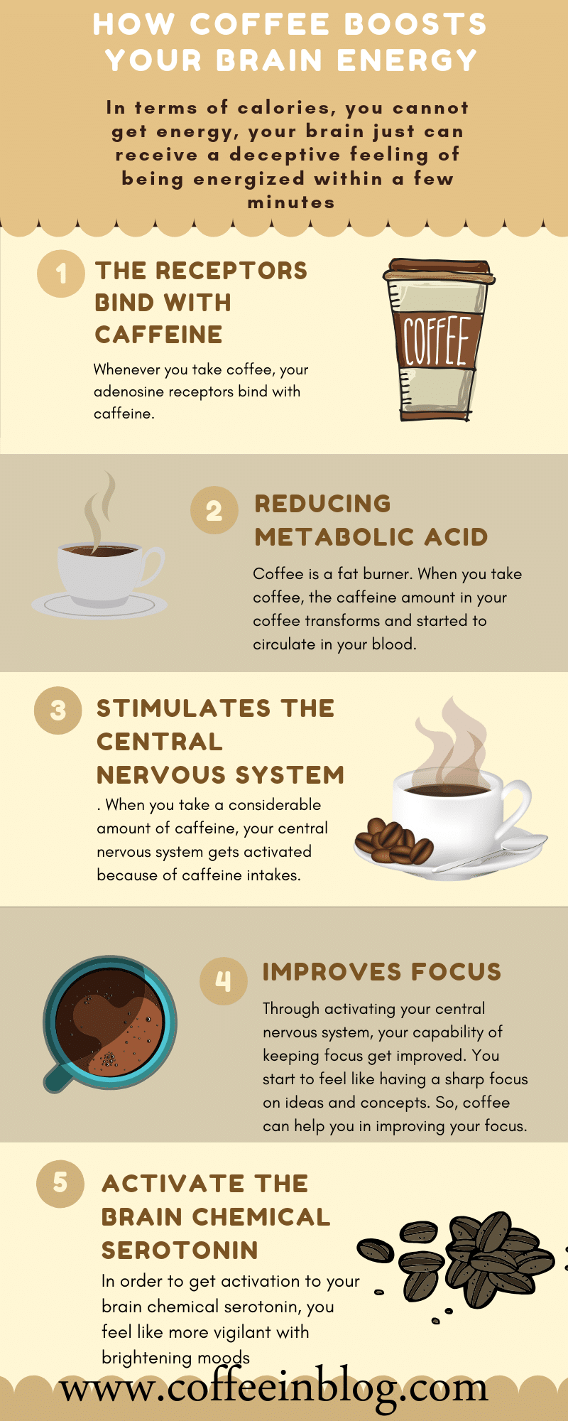 How Coffee Boosts your Brain Energy.png