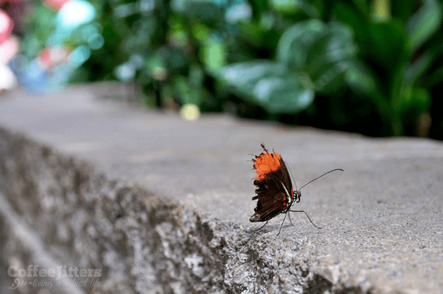 battered butterfly - CoffeeJitters.Net