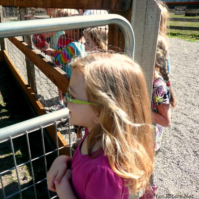 barnyard at Farrel-McWhirter Farm Park