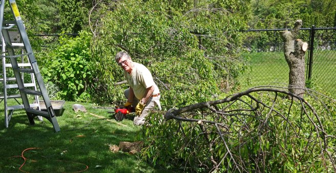 The beloved husband cutting down a tree.