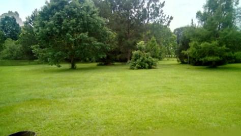 Backyard Rains