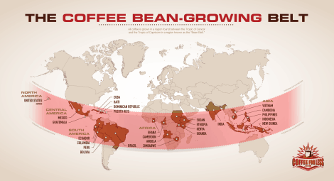 coffee-bean-growing-belt