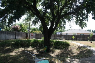 We have a beautiful oak tree in the back yard. Notice its in a giant, sunken pit. LOL
