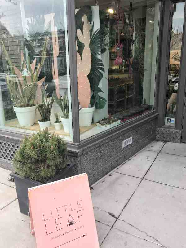 Little Leaf plant store in DC