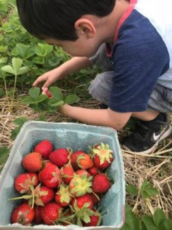 Summer Fun List: Strawberry Picking Farm