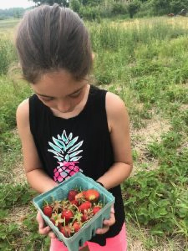 Summer Fun LIst: Strawberry PIcking