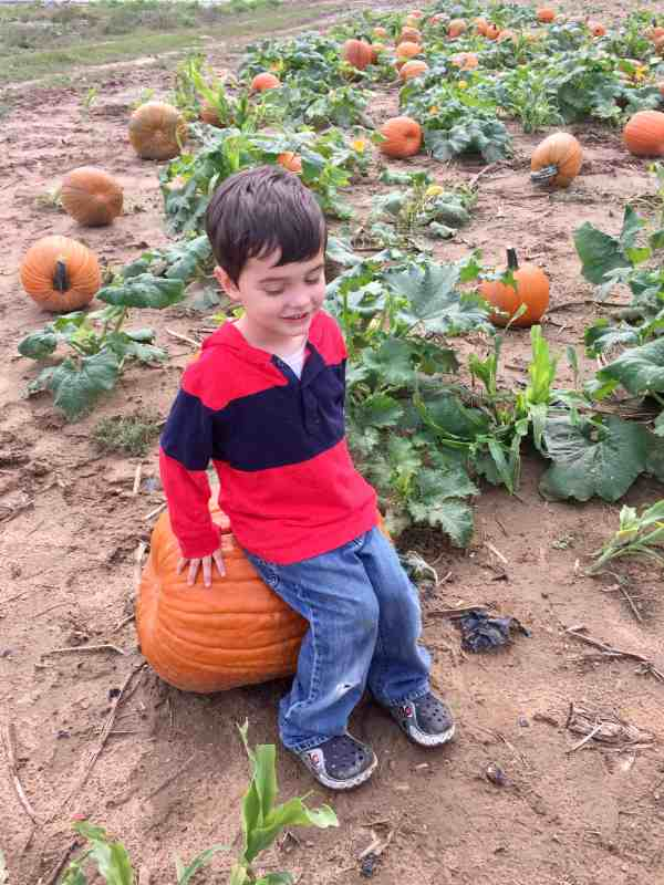 what to do with kids in the fall #familyfriendly #ineexpensive #pumpkinfarm