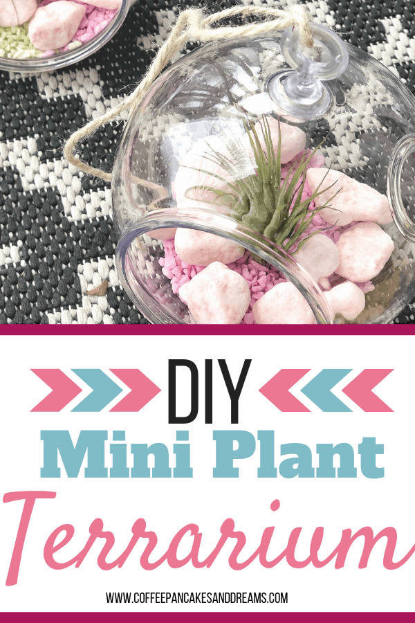 How to make a set of mini terrariums for $10! #diy #airplants #miniterrariums #easy #plantterrarium