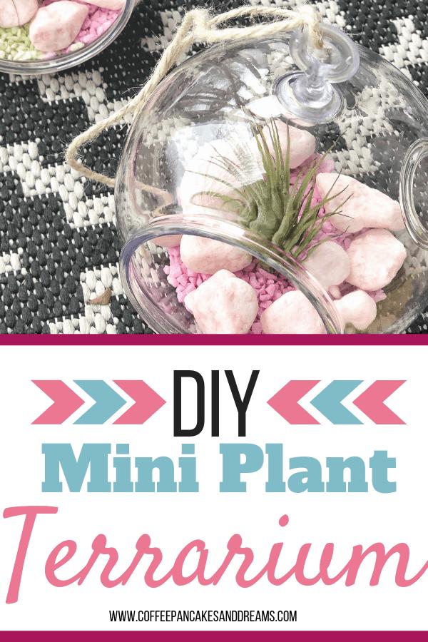 How to make a set of mini terrariums for $10! #diy #airplants #miniterrariums #easy #plantterrarium