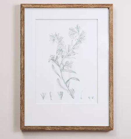 Sage Botanical Framed Art Print