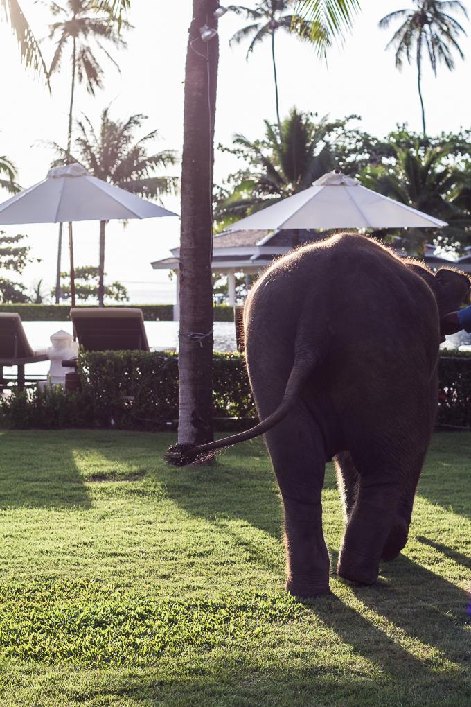 Sofitel Krabi Phokeethra Golf and Spa Resort hotelli thaimaa krabi