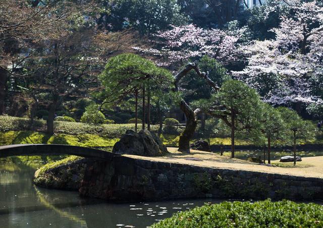 Sakura Kirsikankukat Tokyo-7