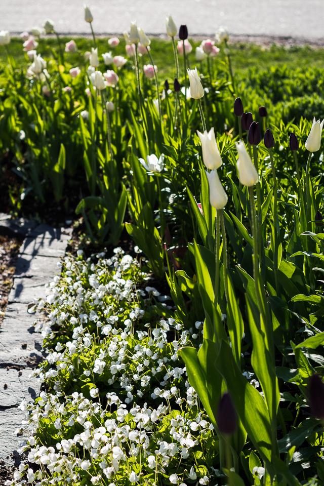 Puutarhassa kukkii 2017-1