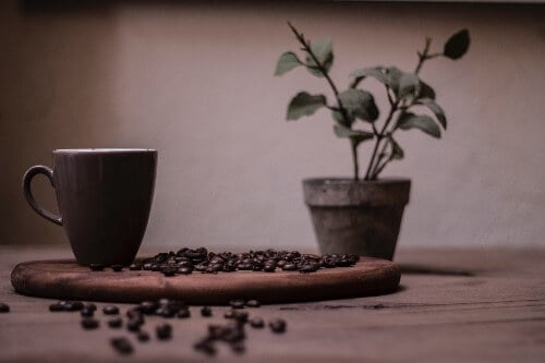 growing organic coffee beans at home