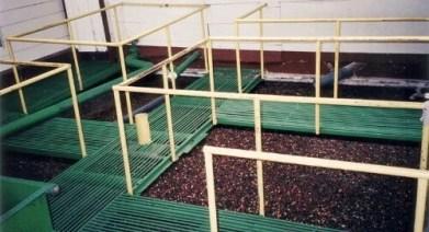 wet milling process organic coffee beans